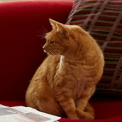 Hoe kunt u het beste kattenpis verwijderen?